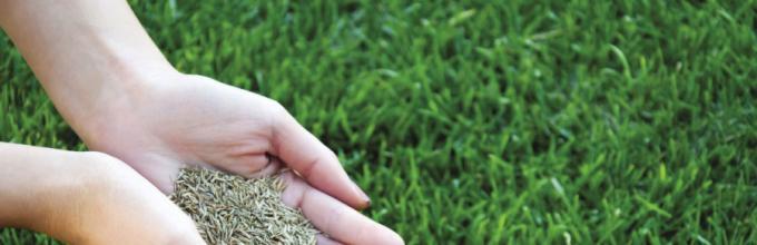 Як садити газонну траву - відео та практичні поради. Як правильно посадити  газонну траву  покрокова технологія посіву галявини. f944b573ce031