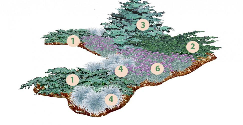 Как посадить клумбу из хвойников