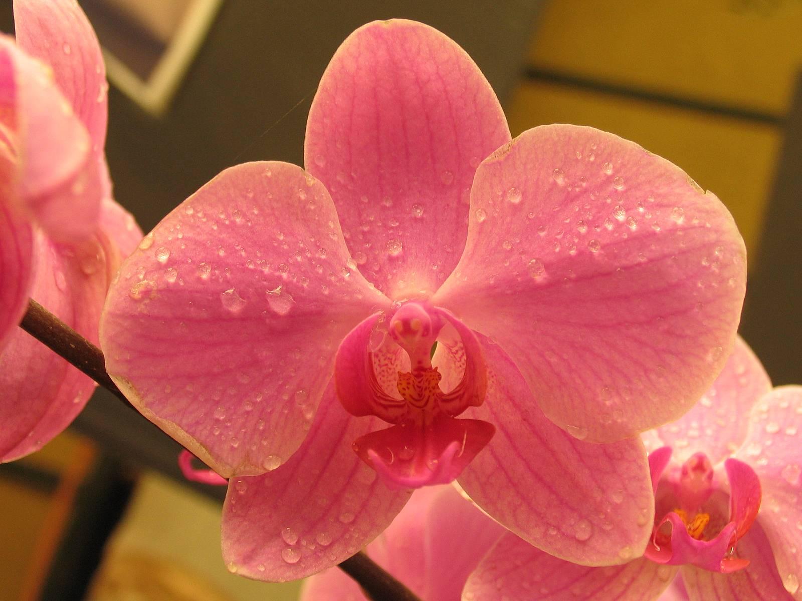 Dünyanın sıra dışı bitkileri. Yırtıcı güzellik ya da yararlı sıradışılık
