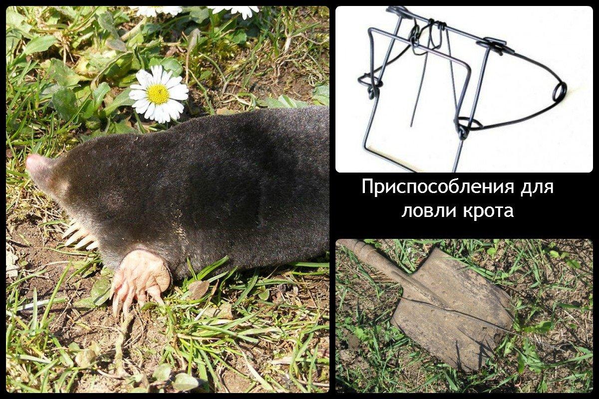 Rubskoye gölü - İvanovo bölgesinde tam dinlenme 30
