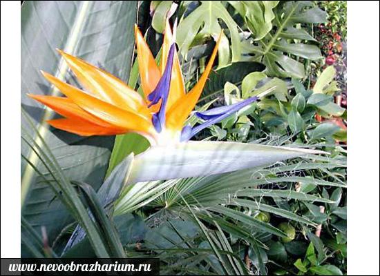 Renkli çiçek Dünyanın En Güzel çiçekleri