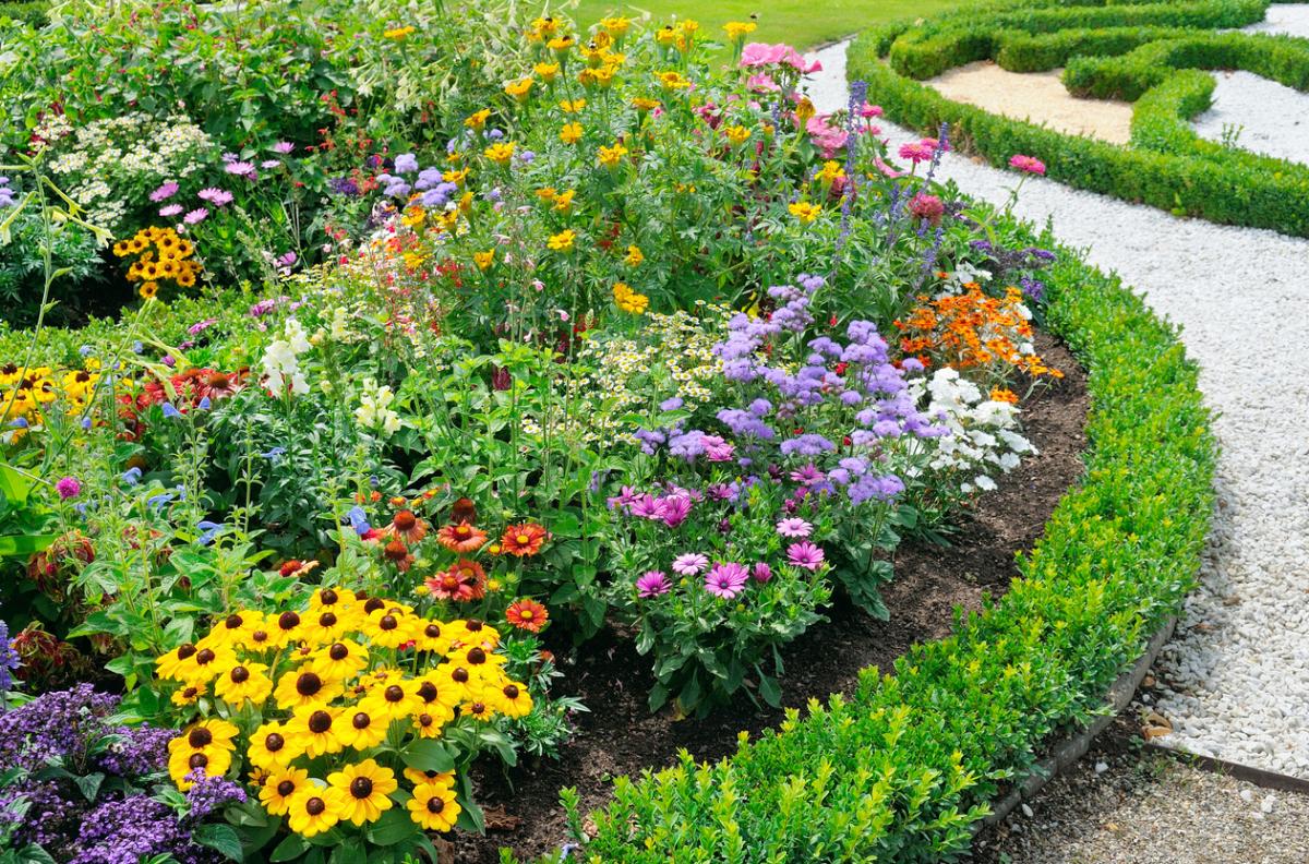 Схема посадки многолетних цветов на клумбе фото 197