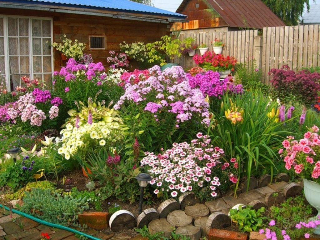 Цветник из однолетних растений со схемой. Самые известные однолетники для клумбы. Названия цветов, которые привлекут бабочки в ваш сад