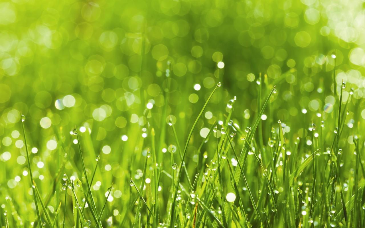 Як садити газонну траву - відео та практичні поради. Як правильно ... c3e3a9cd63fba